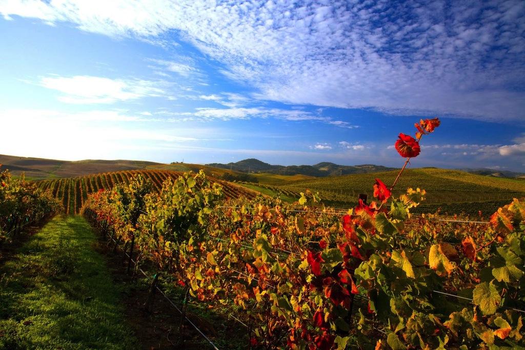 Sonoma Wine Tours Silver Service Wine Tours Of Sonoma County