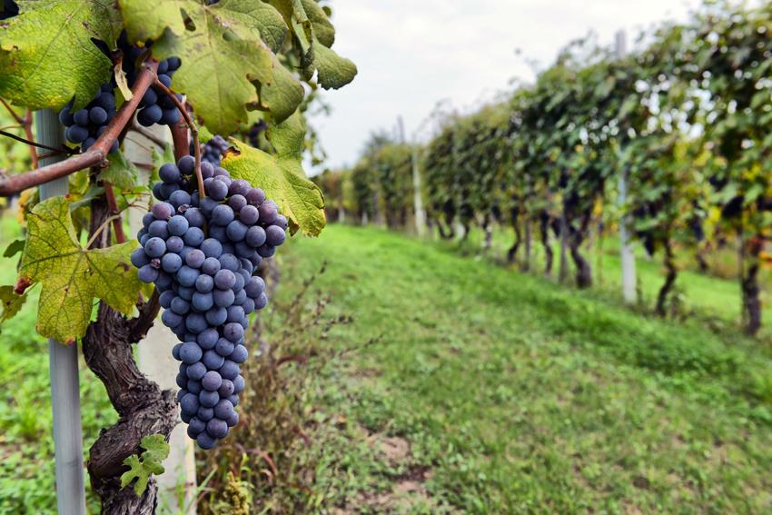 Wine Tours Near San Antonio